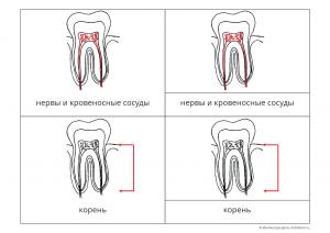зуб карточки