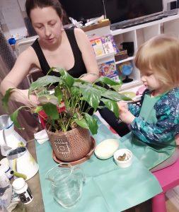Ребёнок ухаживает за комнатным цветком