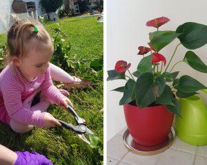 ребёнок и цветы