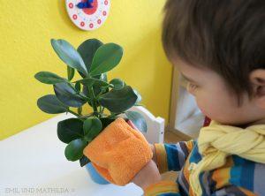 Ребёнок вытирает листья цветов