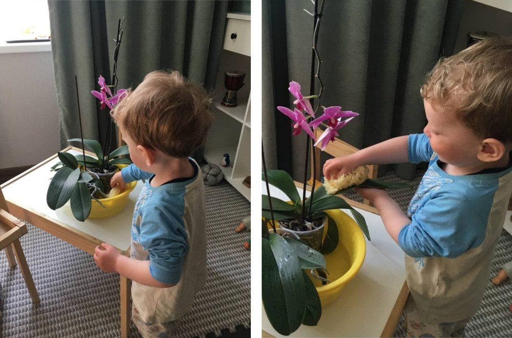 ребёнок вытирает листья цветка